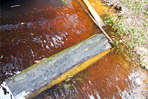Despite the dark tea coffee color of the Rio Negro the Amazon Rig was deadly for peacock bass in 1 to 10 feet of water during our February - March 2012 fishing trip with Ron Speed Jr's Adventures. The water is stained by vegetation-leached acid conveniently making it unsuitable for mosquitoes!